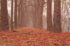 Neem Tree Royalty Free Stock Photography