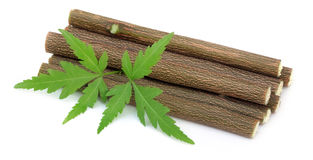 Neem twig use as herbal toothbrush Royalty Free Stock Photography
