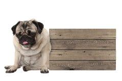Neer omhoog wordt gevoed pug de zitting van de puppyhond naast leeg houten teken Royalty-vrije Stock Fotografie