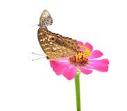 Neergestreken vlinder Stock Foto