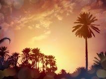 Nefta-Tunesien Stockbild