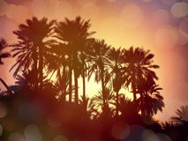 Nefta-Tunisien Arkivbilder