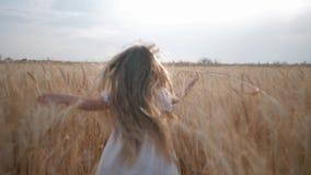 Negócio agrário, menina corrida felizmente através da grão que colhe o campo que desliza suas mãos sobre os spikelets do trigo na video estoque