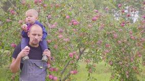 Negócio da vila, pai feliz com um rapaz pequeno que come frutos no pomar durante a colheita filme