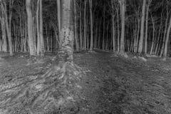 Negatief boslandschap Griezelige bomen met grote wortels Stock Fotografie
