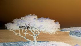 Negativ bild för Mallorca träd Arkivbilder
