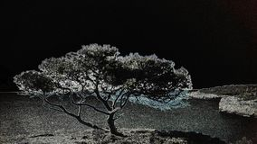 Negativ bild för Mallorca träd Royaltyfria Bilder