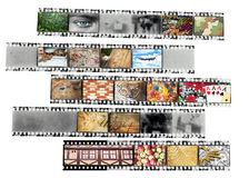 Negative film strip with nice pictures Stock Photography