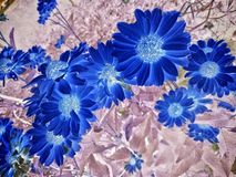 Negative Flowers Stock Images