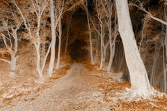 Negative forest with dark trail Stock Photo