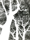 Negative image a bare winter twisted tree Stock Images
