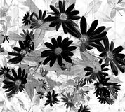 Negative Side Daisy Wallpaper. Textured Daisy flowers in Negative tones Stock Image