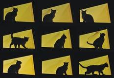 Negen katten stellen-zwarte kat op gele achtergrond Royalty-vrije Stock Foto