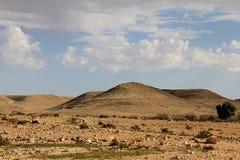Negev öken på våren på bakgrund för blå himmel Arkivbild