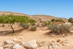 negev Израиля фермы дромадера пустыни верблюда Верблюды в загоне для верблюдов Стоковые Изображения RF