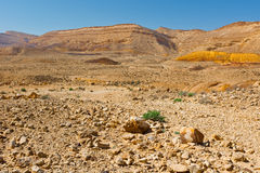 Negev Royalty Free Stock Photography