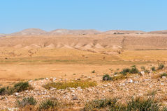 Negev desert, camels in the background Royalty Free Stock Photography