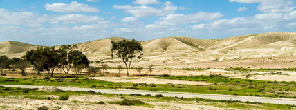 Negev Desert in early spring, Israel Royalty Free Stock Photography