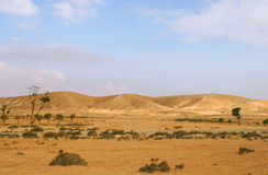 Negev Desert in Israel. Royalty Free Stock Images