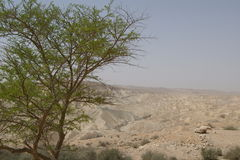 Negev Desert, Israel. Near Kibbutz Sde Boker stock photography