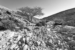 Negev Desert in Israel. Stock Photos