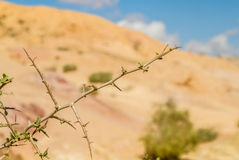 The Negev Desert Royalty Free Stock Photography