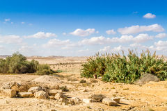 The Negev Desert Royalty Free Stock Photo
