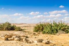 The Negev Desert Royalty Free Stock Photo
