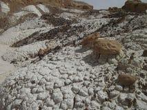 Negev desert. Near Mitzpe-Ramon, Israel Stock Image