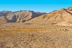 Negev Desert Royalty Free Stock Photo