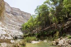 Negew rzeka w pustyni Zdjęcia Royalty Free