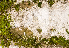 Neglected Concrete Wall with Moss Royalty Free Stock Photo