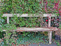 A Neglected Corner of the Garden Stock Image