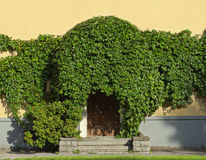 Neglected entrance. To the house, which is thickly overgrown with ivy Royalty Free Stock Images