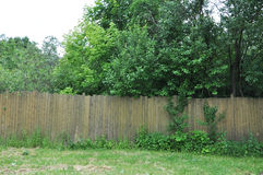The neglected garden behind the old fence Stock Photo
