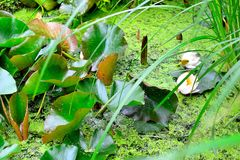neglected pond Royalty Free Stock Images