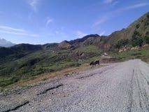 Negli altopiani la strada penetra le montagne fotografia stock libera da diritti