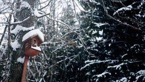 Negli aviari d'attaccatura innevati di Forest Park per gli uccelli della foresta stock footage