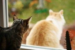 Negligencia del gato Imágenes de archivo libres de regalías