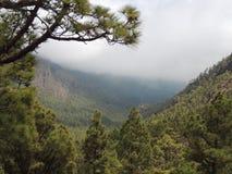 Negligenciando uma montanha arborizada Fotos de Stock Royalty Free