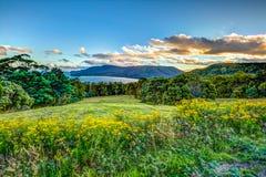 Negligencie a península de Tasmasn imagem de stock