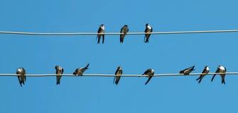 Negociações dos pássaros Fotografia de Stock Royalty Free