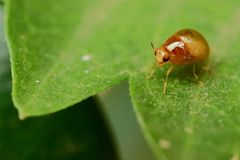 Negocio del insecto del verano Imágenes de archivo libres de regalías