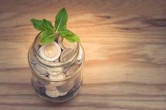 Negocio y concepto financiero: El árbol verde del sprount que crece a través del dinero acuña en tarro del vidrio del dinero de l fotos de archivo libres de regalías