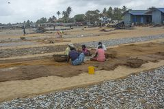 Negombo,斯里兰卡鱼市  免版税库存图片