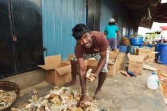 Negombo,斯里兰卡, 2015年11月06日:供以人员排序干燥鱼在鱼市上 库存图片