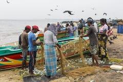 NEGOMBO,斯里兰卡- 11月30 :人们收集干鱼和 免版税库存照片