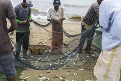 NEGOMBO,斯里兰卡- 11月30 :人们收集干鱼和 库存图片