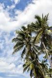Negombo, Σρι Λάνκα Στοκ φωτογραφίες με δικαίωμα ελεύθερης χρήσης
