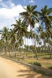 Negombo beach at Sri Lanka Royalty Free Stock Image